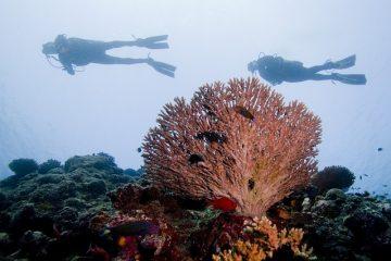 Salaires des instructeurs de plongée sous-marine