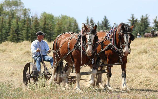 À quelle fréquence devrais-je vermifuger mon cheval et quel type de ver devrais-je utiliser ?