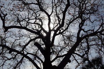 Comment identifier le bois de chêne