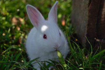 Le cycle de vie d'un lapin