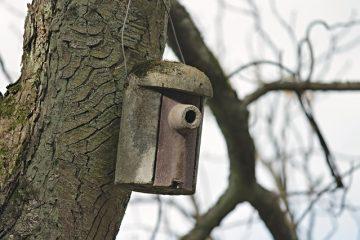 Comment empêcher les oiseaux de nicher sous les abris d'auto