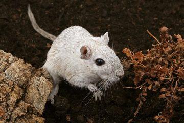 Comment faire un grand terrain de jeu pour les hamsters
