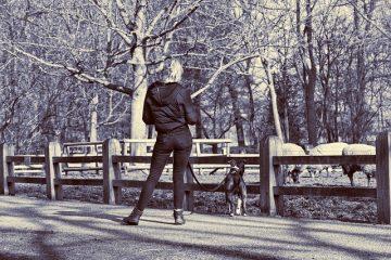 Les meilleurs chiens pour les personnes âgées ou handicapées