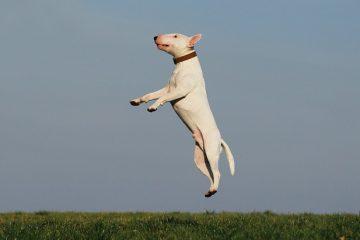 Comment devenir un dresseur de chiens guides d'aveugle
