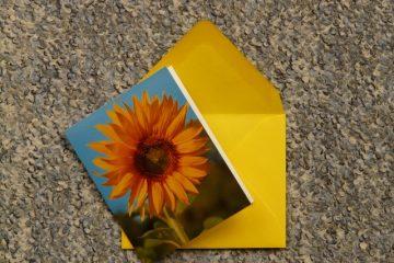Comment envoyer une carte de voeux gratuite au téléphone portable d'un ami ?