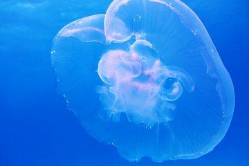 Comment faire des méduses à assiette en papier