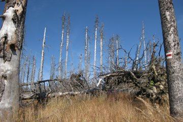 Comment les pluies acides affectent-elles les plantes et les arbres ?