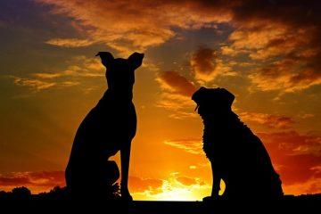 Comment prendre soin d'un chien boiteux