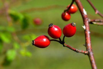 Effets secondaires négatifs des vitamines b complexes