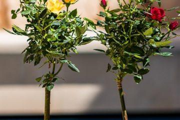 Idées d'arrangement de pots de fleurs d'été pour l'extérieur