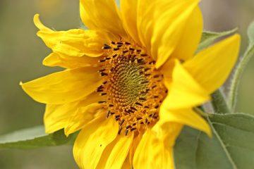 La meilleure façon de remercier quelqu'un qui vous a donné des fleurs.