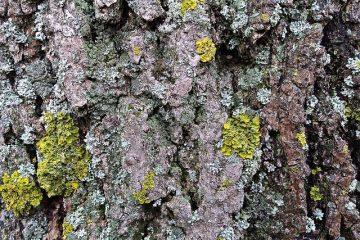 Comment nettoyer la mousse et les lichens des pierres tombales.