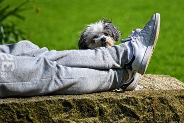 Comment soigner un chien qui a des maux d'estomac ?