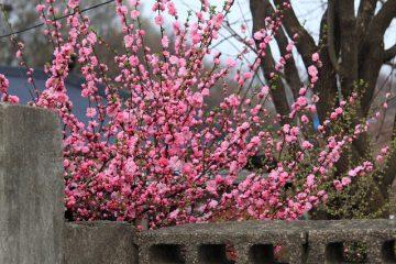 Idées sur la façon de clôturer un jardin