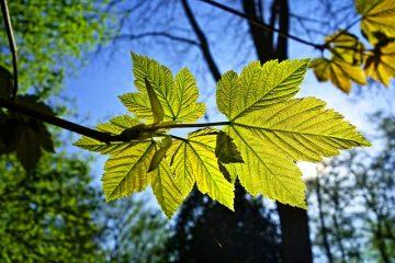 Le thé vert est-il bon pour les plantes ?