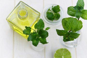 Les types de plantes menthe
