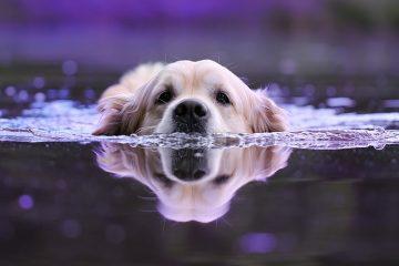Vomissements biliaires chez les chiens