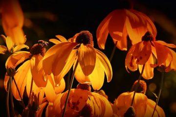 Comment faire des fleurs en mousse de plumeria