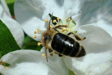 Comment identifier les insectes volants et les ravageurs