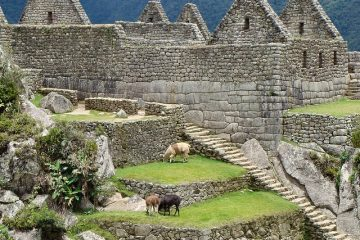 Cougars dans les mythes incas
