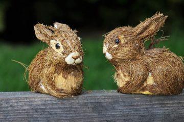 Remède maison pour empêcher les lapins de manger mes plantes.