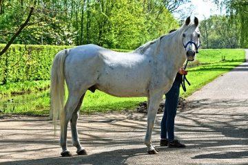 Signes Symptômes du rhume chez les chevaux