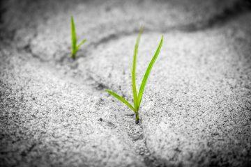 Types de mauvaises herbes à feuilles larges