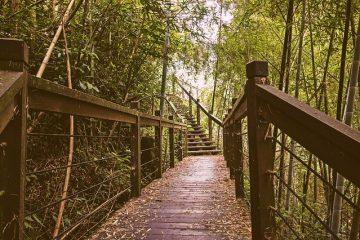 Alternatives aux clôtures en bois
