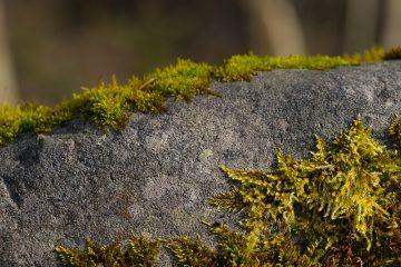 Comment enlever la mousse d'une pierre tombale