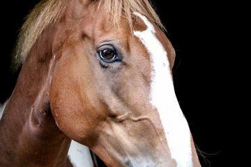 Comment peindre les chevaux avec des peintures acryliques