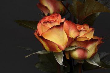 Fleurs pour les mariages en octobre