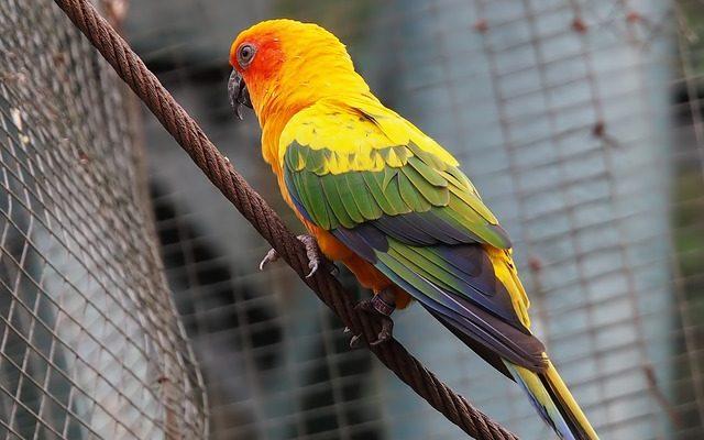 Quelles espèces d'oiseaux peuvent vivre avec les perruches ?