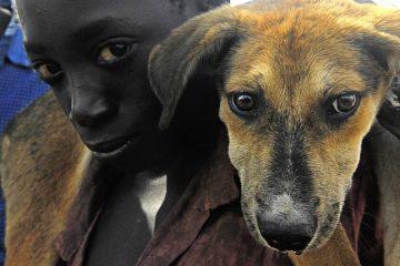 Symptômes des complications du travail canin