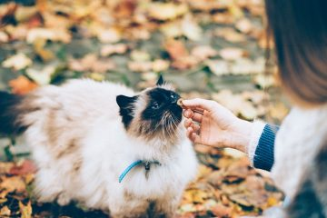 Comment faire un collier anti-rayures pour chats