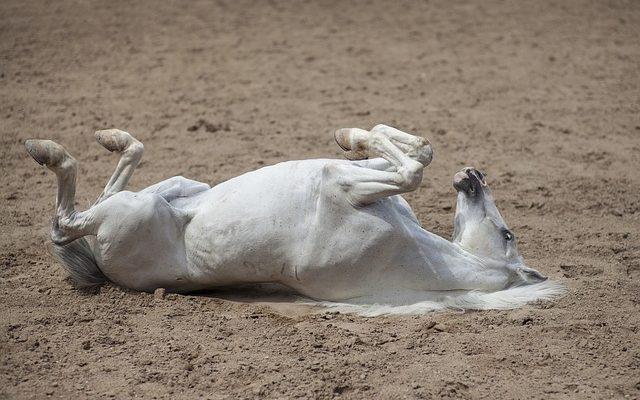 Comment réparer les chevaux à pieds de pigeon