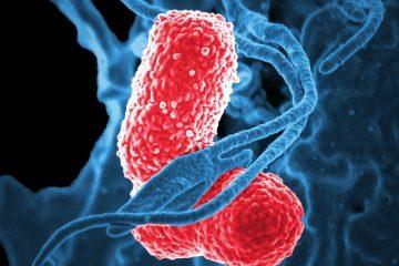 Durée et symptômes de la pneumonie virale