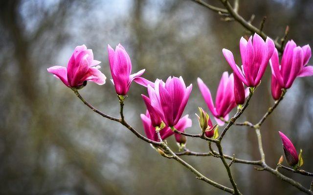 Identification des types d'arbustes à feuillage persistant
