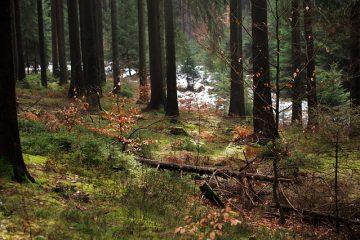 La forêt de boule de neige est-elle dangereuse pour les animaux ?