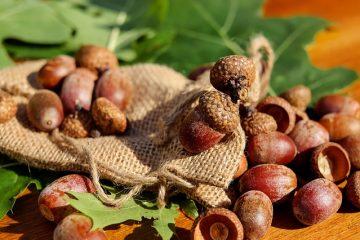 Maladies de l'hortensia à feuilles de chêne