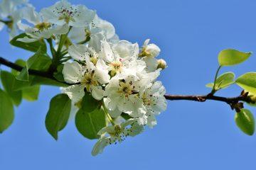 Plantes à longue tige à fleurs blanches