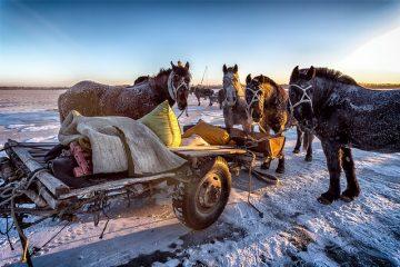 Réactions à l'ivermectine chez les chevaux